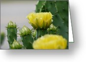 Maria Urso Greeting Cards - Succulent Yellow Greeting Card by Maria Urso - Artist and Photographer