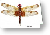 Pennant Greeting Cards - Sudy of a Calico Pennant Greeting Card by Thom Glace