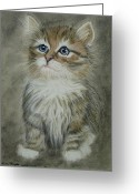 Kitten Pastels Greeting Cards - Sugar Greeting Card by Kim Shayler