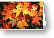 Maple Leaves Greeting Cards - Sugar Maple Greeting Card by Margaret Hood