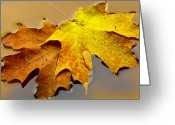 Puddle Greeting Cards - Sugar Maple No. 2 Greeting Card by Harry H Hicklin