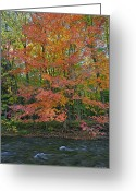 Escarpment Greeting Cards - Sugar Maple Greeting Card by Phill  Doherty