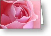 Pastels. Greeting Cards - Sugar of Rose Greeting Card by Jacqueline Migell