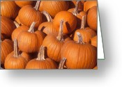 Pumpkin Farm Greeting Cards - Sugar Pumpkins Greeting Card by John Burk
