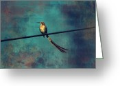 Birdwatcher Greeting Cards - Sugarbird Greeting Card by Deborah Hall Barry