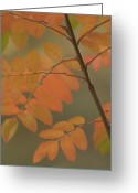 Image Type Photo Greeting Cards - Sumac Leaves In Fall Greeting Card by Phil Schermeister