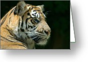 Tiger Tapestries Textiles Greeting Cards - Sumatran Tiger Greeting Card by Mary Lane