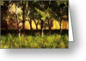 Leaves Photo Greeting Cards - Summer Birch Trees Greeting Card by Bob Orsillo