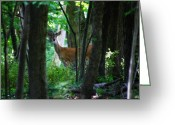 White Tailed Deer Greeting Cards - Summer Buck 1 Greeting Card by Scott Hovind