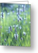 "\""aimelle Photography\\\"" Greeting Cards - Summer Charm Greeting Card by Aimelle"