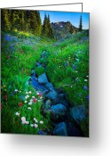 Lupines Greeting Cards - Summer Creek Greeting Card by Inge Johnsson