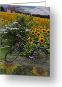 Rural Landscapes Greeting Cards - Summer Cycling Greeting Card by Debra and Dave Vanderlaan