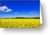 Rapeseed Greeting Cards - Summer Field Greeting Card by Christopher Elwell and Amanda Haselock
