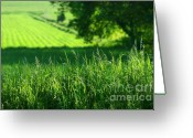 Farm Digital Art Greeting Cards - Summer fields of green Greeting Card by Sandra Cunningham
