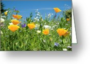 Meadow Greeting Cards - Summer Flowers Greeting Card by Sophie De Roumanie
