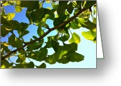 Tamara Stoneburner Greeting Cards - Summer Ginkgo Greeting Card by Tamara Stoneburner