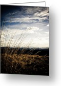 Wild Grass Greeting Cards - Summer Grass Greeting Card by Scott Sawyer