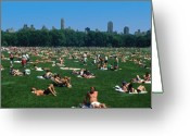 Sunbathing Trees Greeting Cards - Summer in Central Park Greeting Card by Carl Purcell