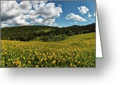 Cheering Greeting Cards - Summer Light Greeting Card by Leland Howard