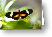Beauty Mark Greeting Cards - Summer Love Greeting Card by Leslie Leda