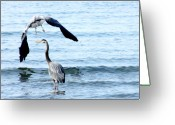 Herons Greeting Cards - Summer Parasol Greeting Card by Barbara  White