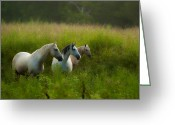 Ron Mcginnis Photography Greeting Cards - Summer Pastures Greeting Card by Ron  McGinnis