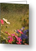 Dew Drop Greeting Cards - Summer Rain Greeting Card by Darren Fisher