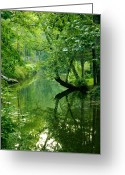 Landscape Framed Print Greeting Cards - Summer Stream Greeting Card by Melissa Petrey