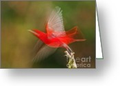 Vermillon Greeting Cards - Summer Tanager Greeting Card by Jean-Luc Baron