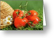 Greenhouse Greeting Cards - Summer tomatoes Greeting Card by Sandra Cunningham