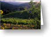 Landscapes Framed Prints Greeting Cards - Summer Vineyard Greeting Card by Kathy Yates