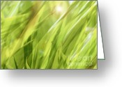 Transparent Green Greeting Cards - Summertime Green Greeting Card by Ann Powell