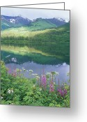 Fireweed Greeting Cards - Summit Lake, Sunbeam On Forest Greeting Card by Rich Reid
