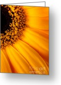 Williams Photo Greeting Cards - Sun Burst - Sunflower Greeting Card by Martin Williams