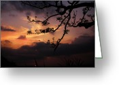 Gloaming Greeting Cards - Sun Caught by branches  Greeting Card by Rosvin Des Bouillons Gamboa