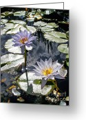 Waterlilies Greeting Cards - Sun-drenched Lily Pond         Greeting Card by Kaye Menner
