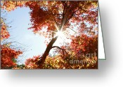 Warmth Greeting Cards - Sun in forest Greeting Card by Les Cunliffe