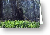 West Virginia Highlands Greeting Cards - Sun-Kissed Ramps Greeting Card by Randy Bodkins