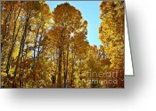 Nevada Greeting Cards - Sun Star Behind Sierra Nevada Aspen Trees Greeting Card by Scott McGuire
