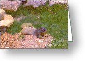 Sunbathing Greeting Cards - Sunbathing Squirrel Greeting Card by Methune Hively