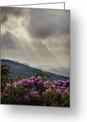 Blue Ridge Photographs Greeting Cards - Sunbeams and Rhododendron Greeting Card by Rob Travis