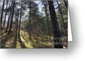 Generic Greeting Cards - Sunbeams through forest Greeting Card by Sami Sarkis