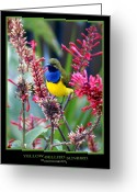 Queensland Photo Greeting Cards - Sunbird Greeting Card by Holly Kempe