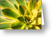 Cactus Flower Digital Art Greeting Cards - Sunburst Succulent Close-Up 2 Greeting Card by Amy Vangsgard