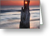 Log Greeting Cards - Suncrack Greeting Card by Evgeni Dinev
