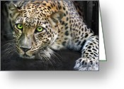 Animals Greeting Cards - Sundari Greeting Card by Big Cat Rescue