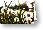 Landscapes Framed Prints Greeting Cards - Sundays Walk Greeting Card by Jerry Cordeiro