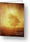 Tree Artwork Mixed Media Greeting Cards - Sundown Landscape Greeting Card by Lutz Baar