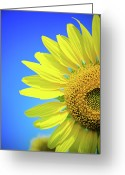 Stamen Greeting Cards - Sunflower Against Blue Sky Greeting Card by N. Umnajwannaphan