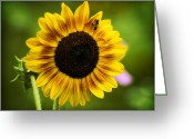 Masking Digital Art Greeting Cards - Sunflower And Bee Greeting Card by J Larry Walker